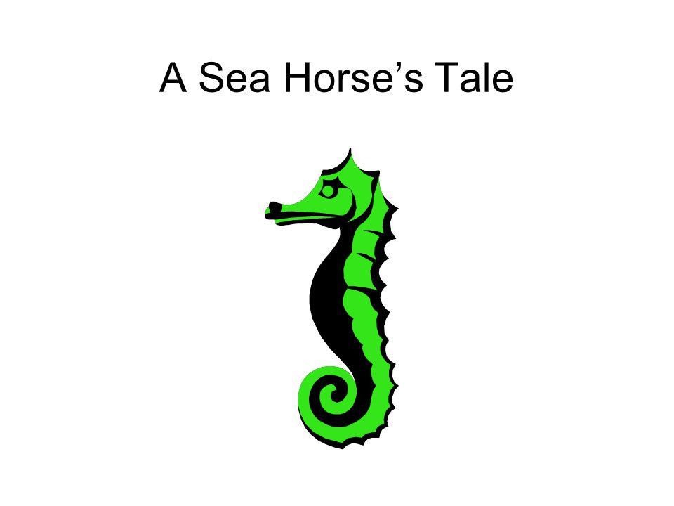 A Sea Horse's Tale