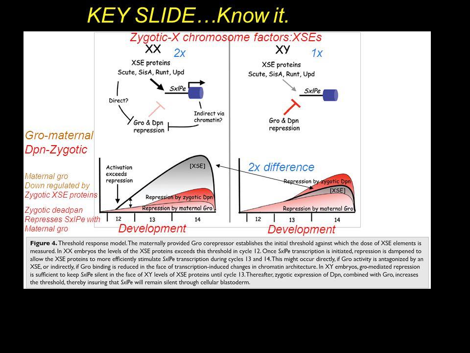 KEY SLIDE…Know it. Zygotic-X chromosome factors:XSEs 2x 1x