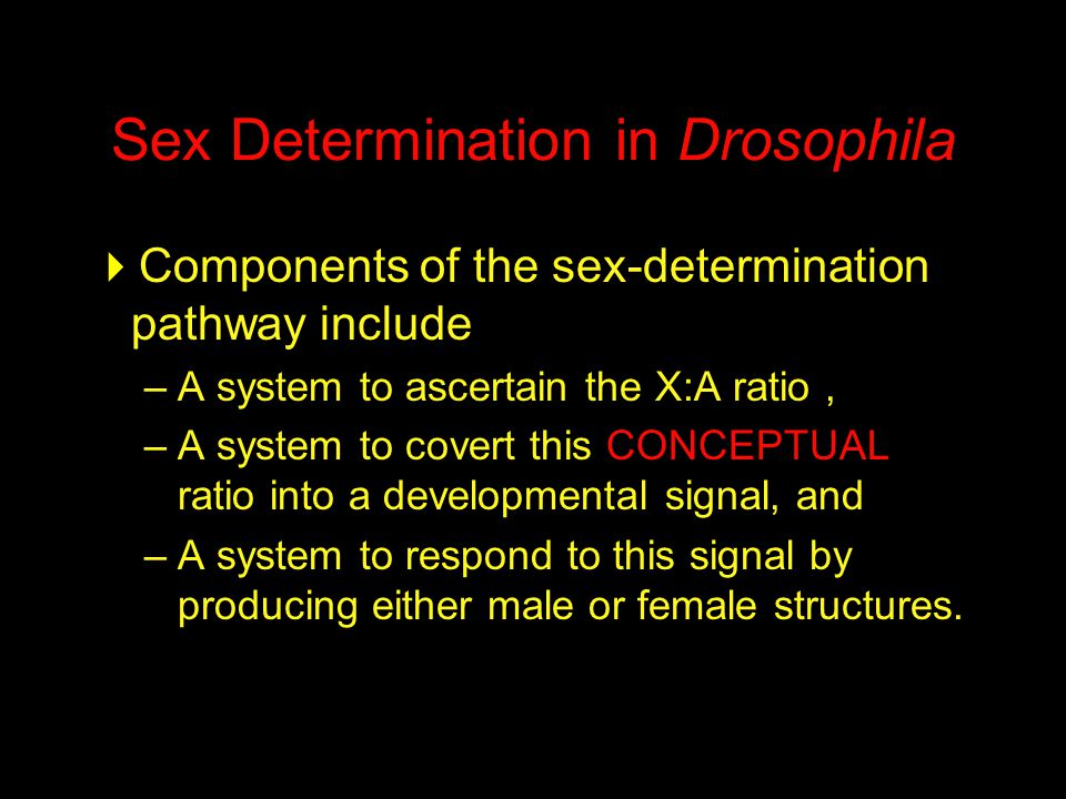 Sex Determination in Drosophila
