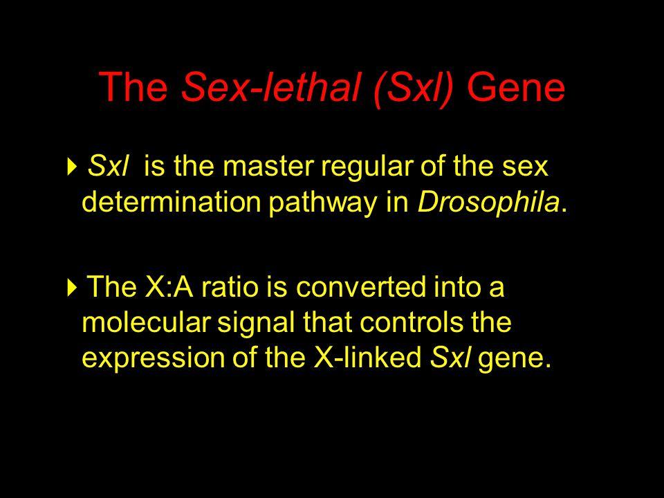 The Sex-lethal (Sxl) Gene