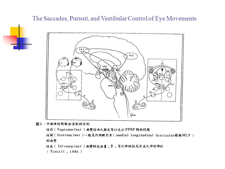 The Saccades, Pursuit, and Vestibular Control of Eye Movements