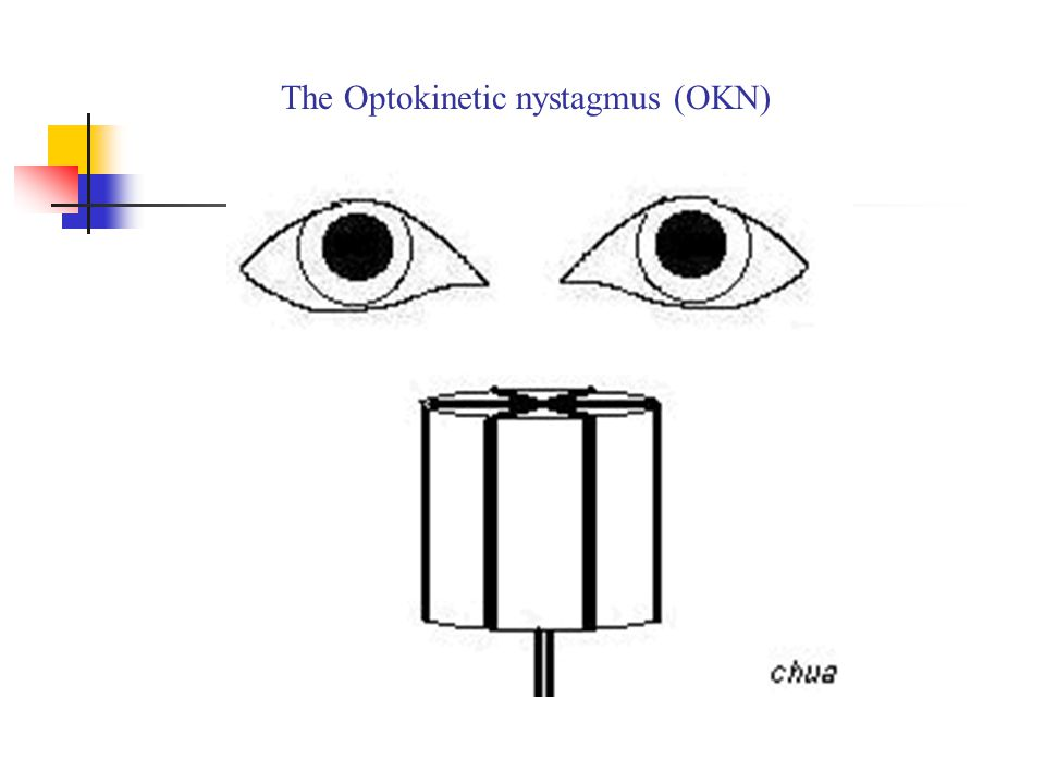 The Optokinetic nystagmus (OKN)