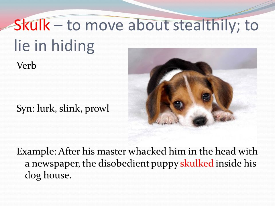 Skulk – to move about stealthily; to lie in hiding