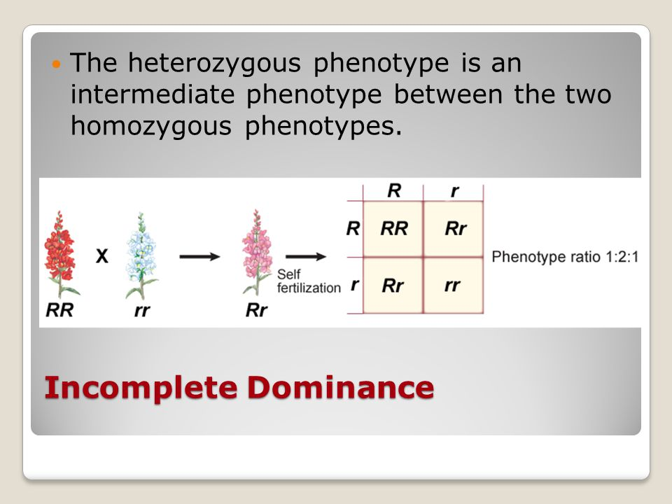 The heterozygous phenotype is an intermediate phenotype between the two homozygous phenotypes.
