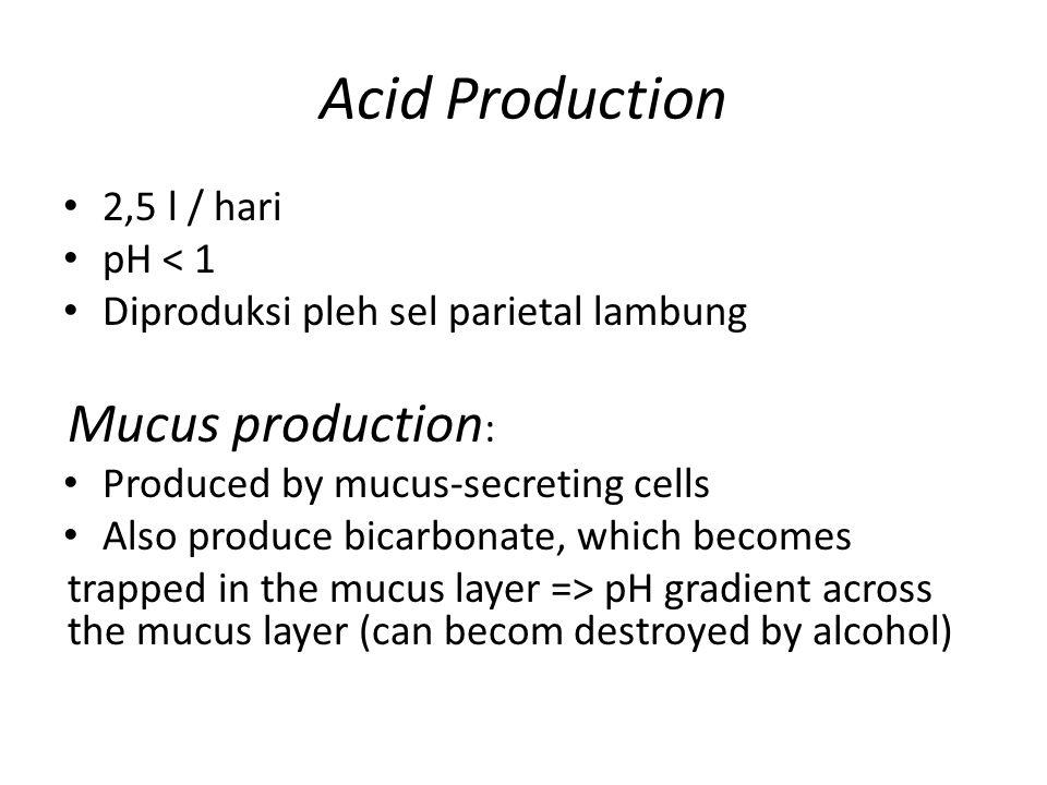 Acid Production Mucus production: 2,5 l / hari pH < 1