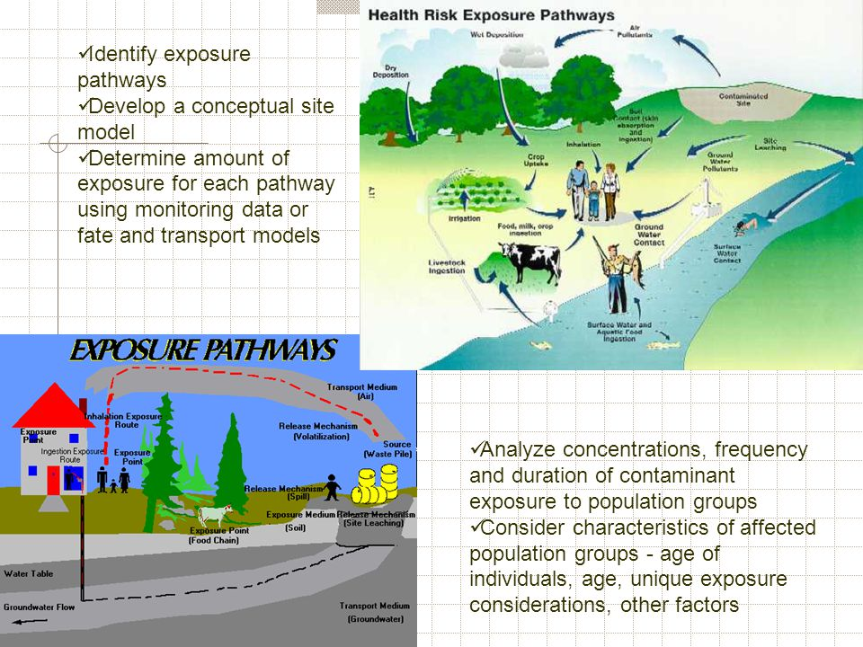 Identify exposure pathways Develop a conceptual site model