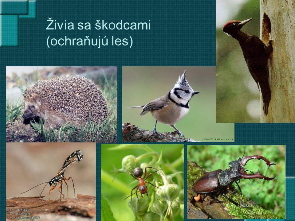 Živia sa škodcami (ochraňujú les)