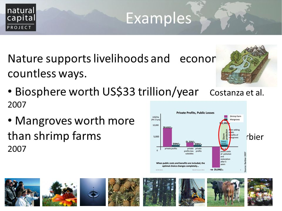 Examples Nature supports livelihoods and economies in countless ways.