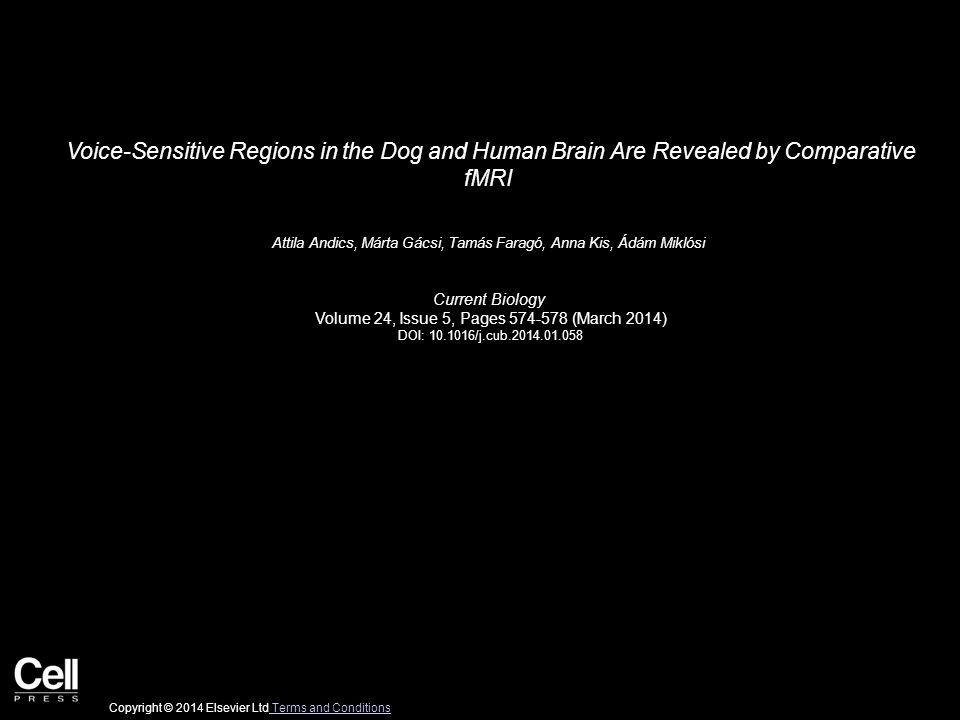 Voice-Sensitive Regions in the Dog and Human Brain Are Revealed by Comparative fMRI