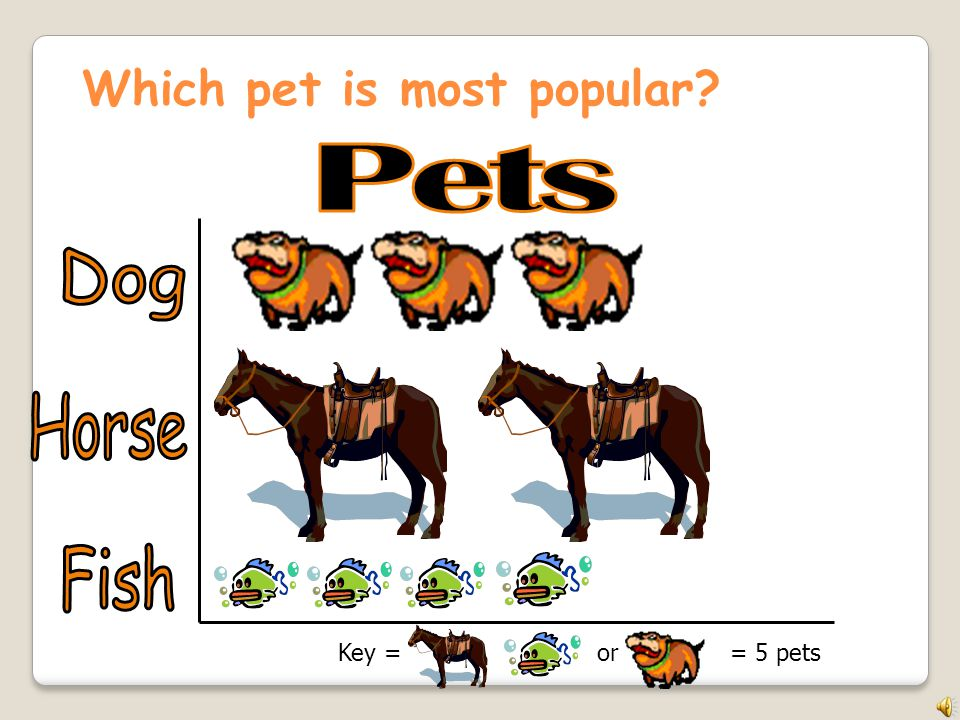 Which pet is most popular