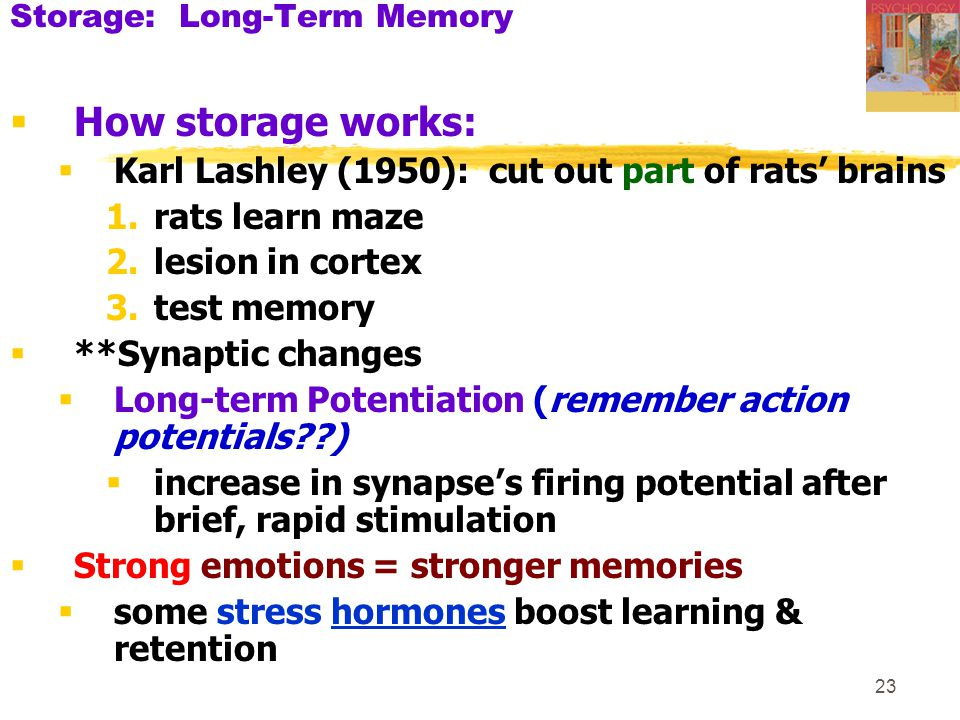 Storage: Long-Term Memory