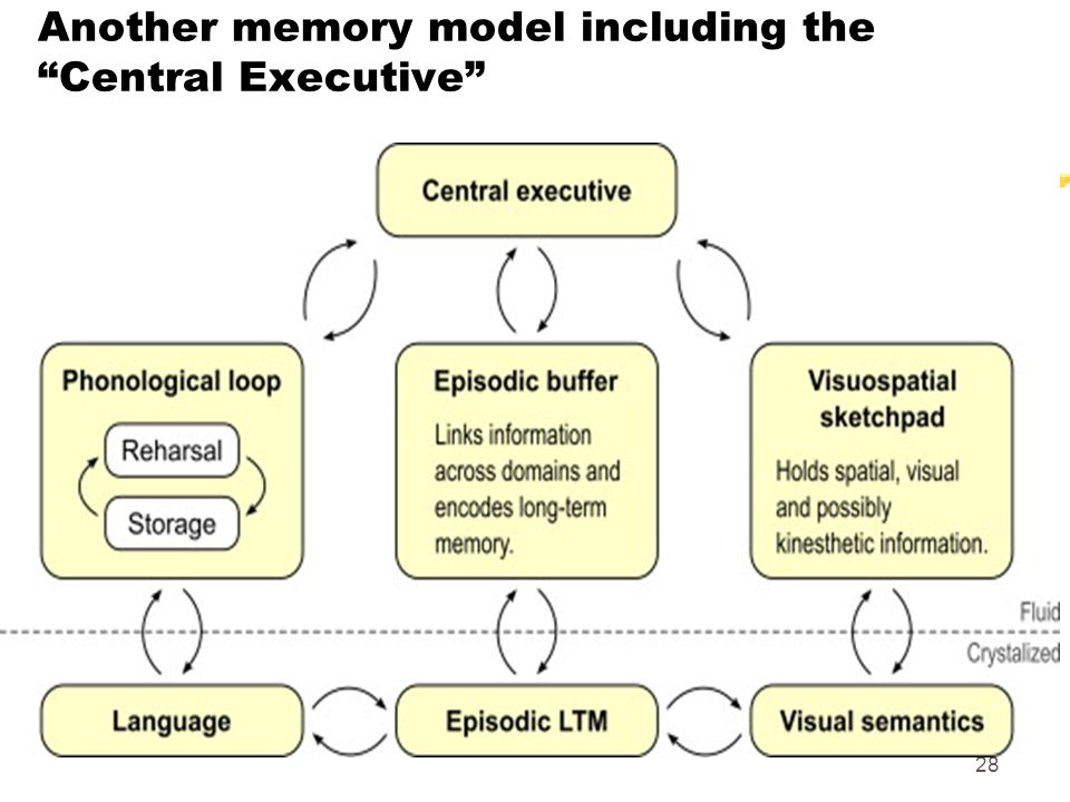 Another memory model including the Central Executive