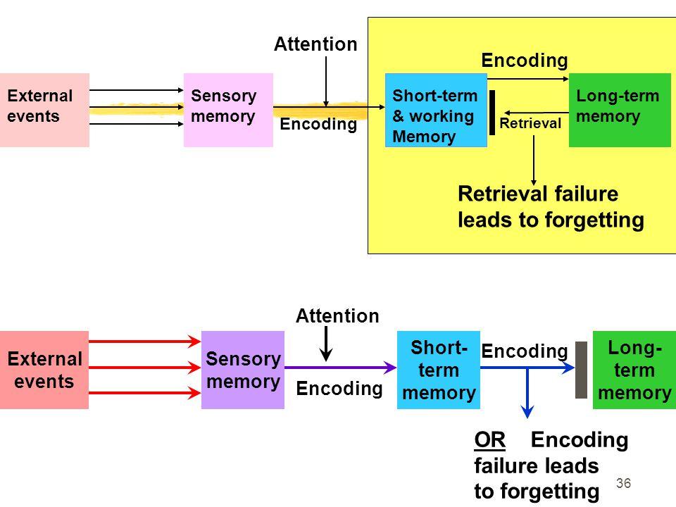 Retrieval failure leads to forgetting OR Encoding failure leads