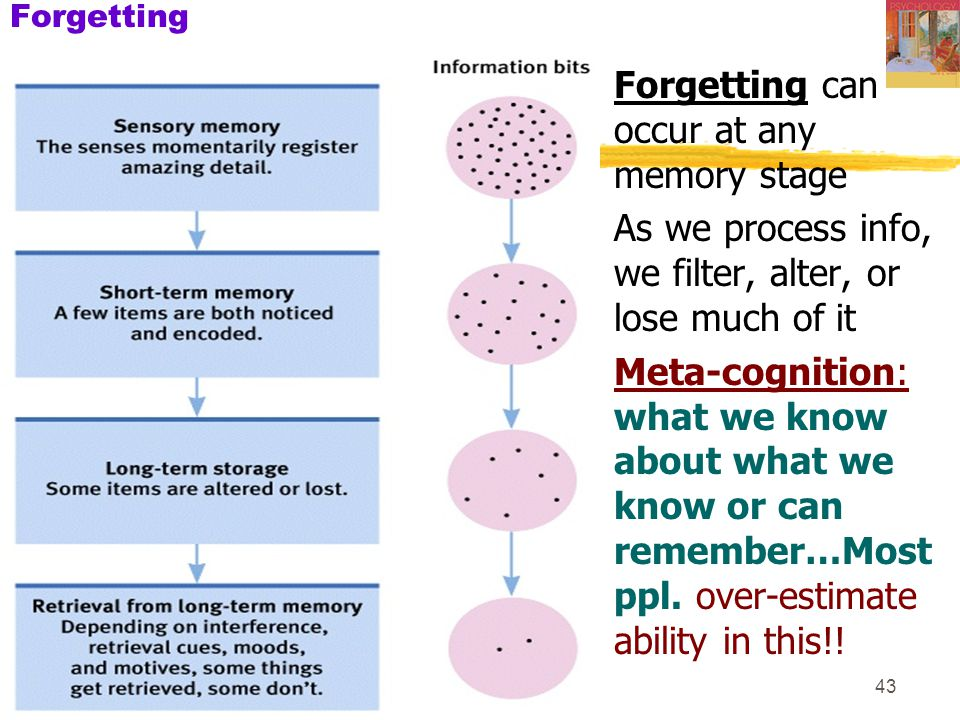 Forgetting can occur at any memory stage