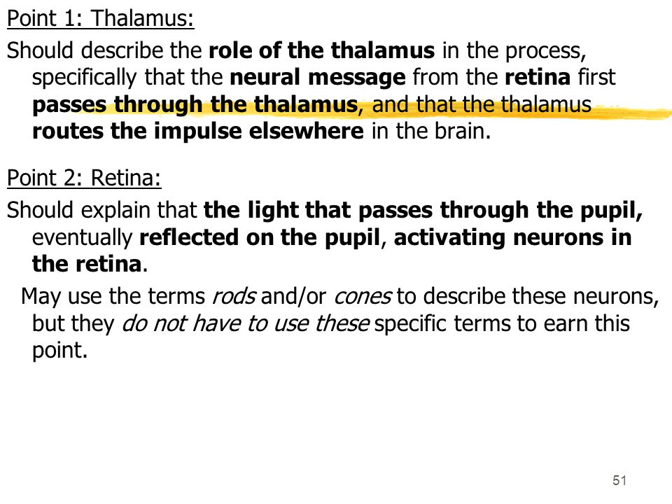 Point 1: Thalamus: Should describe the role of the thalamus in the process, specifically that the neural message from the retina first passes through the thalamus, and that the thalamus routes the impulse elsewhere in the brain.