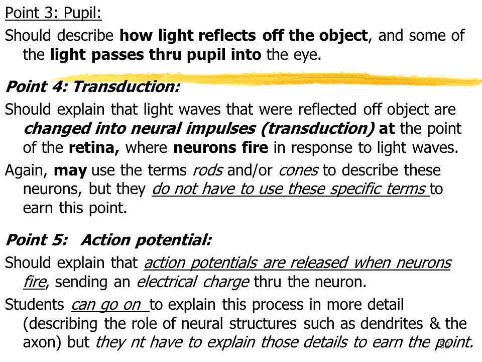 Point 3: Pupil: Should describe how light reflects off the object, and some of the light passes thru pupil into the eye.