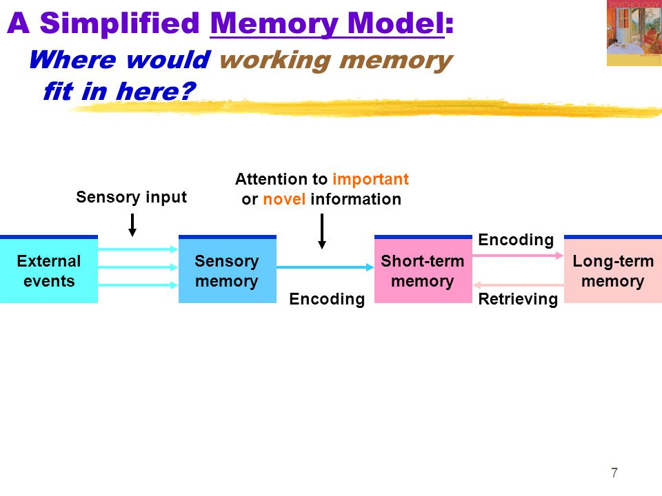 A Simplified Memory Model: Where would working memory fit in here