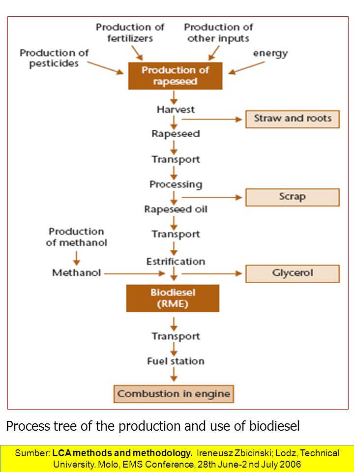 Process tree of the production and use of biodiesel