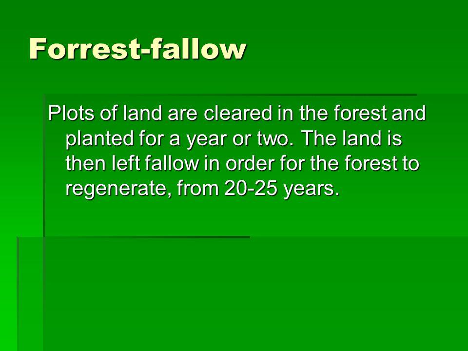 Forrest-fallow