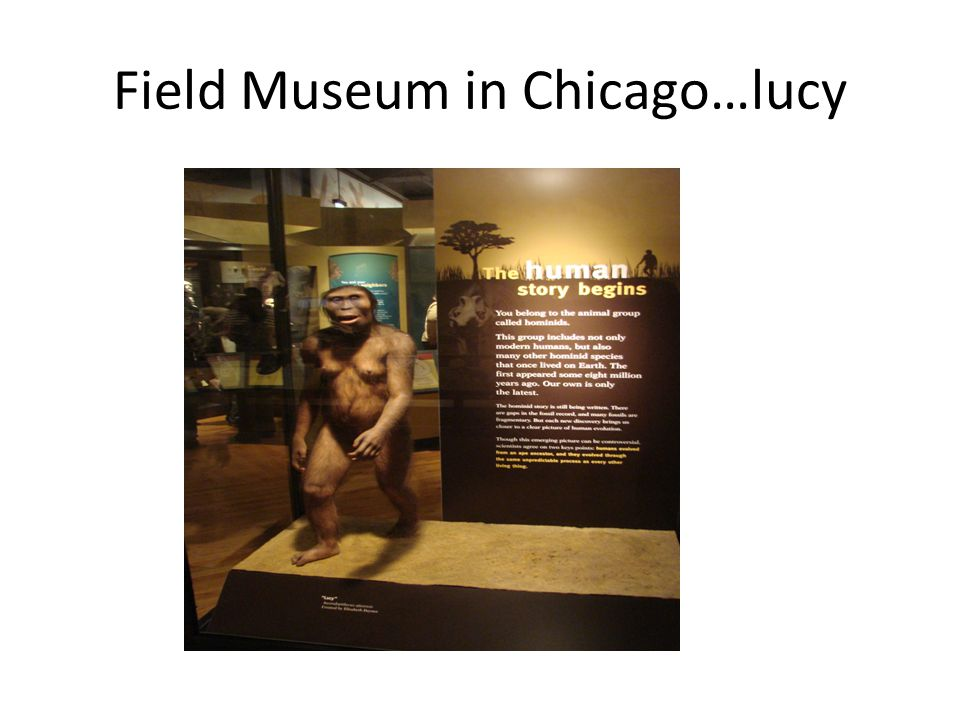 Field Museum in Chicago…lucy