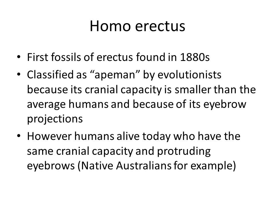 Homo erectus First fossils of erectus found in 1880s
