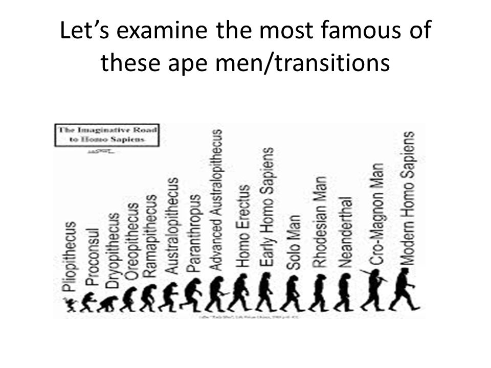 Let's examine the most famous of these ape men/transitions