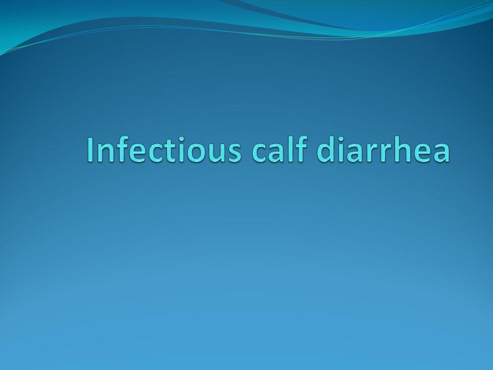 Infectious calf diarrhea