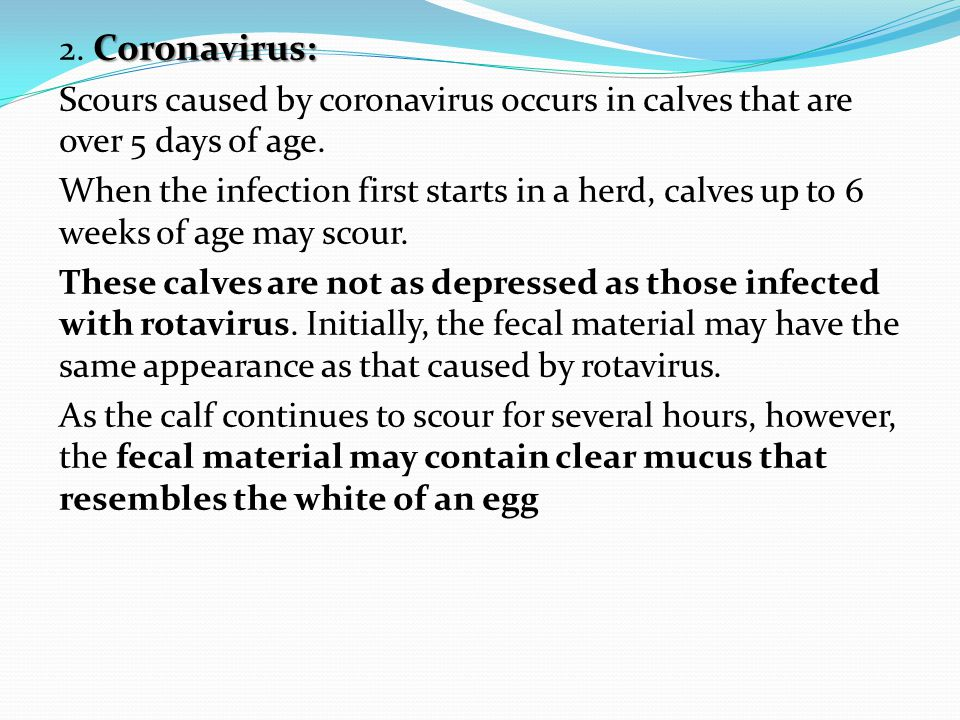 2. Coronavirus: Scours caused by coronavirus occurs in calves that are over 5 days of age.
