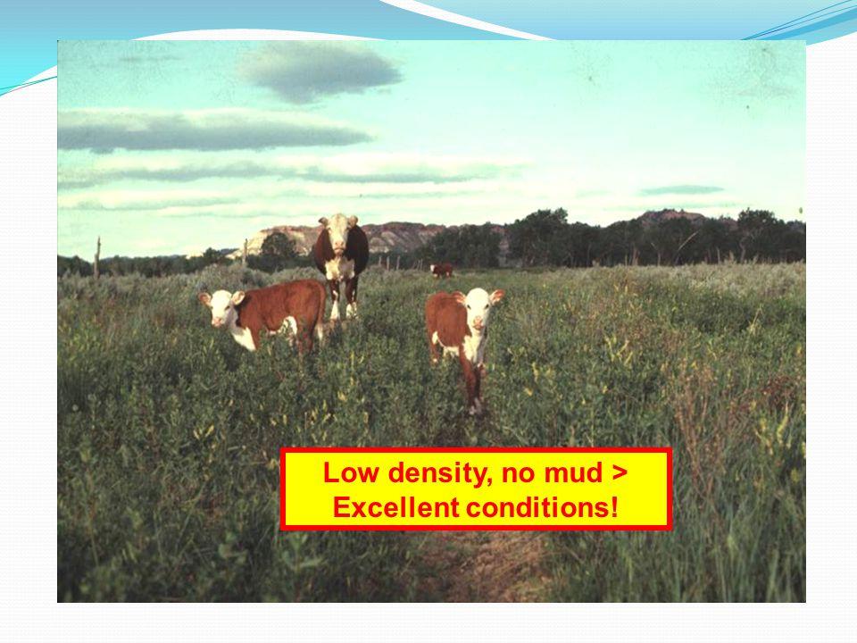 Low density, no mud > Excellent conditions!