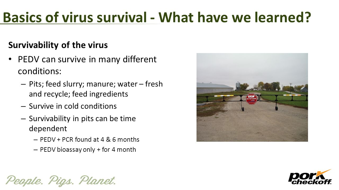 Basics of virus survival - What have we learned