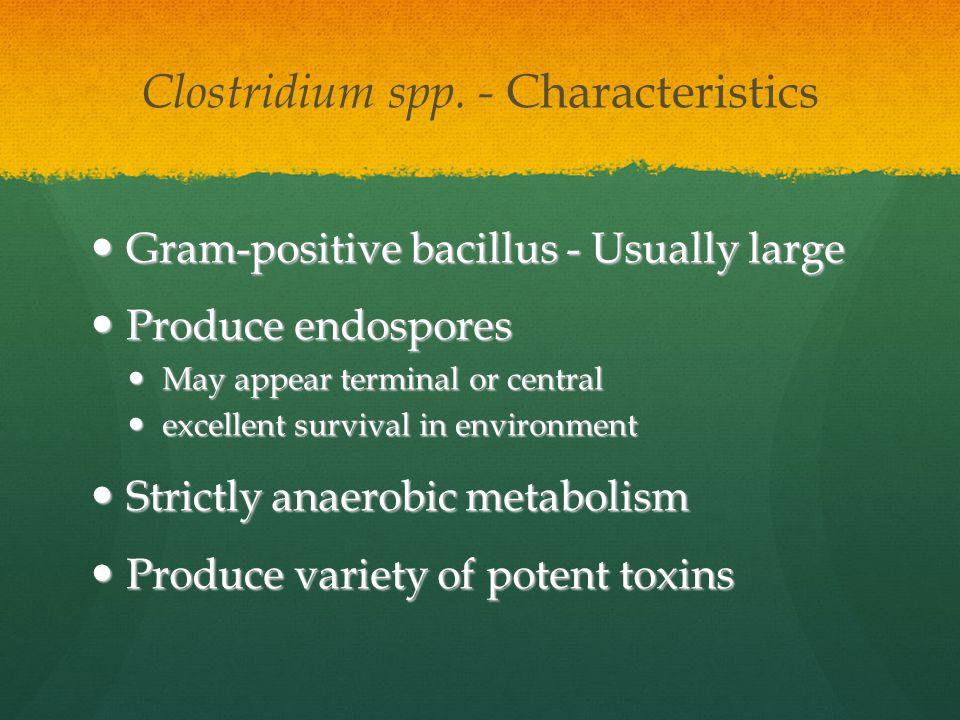 Clostridium spp. - Characteristics