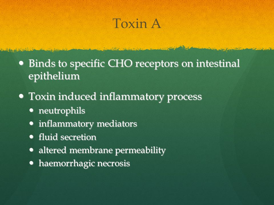 Toxin A Binds to specific CHO receptors on intestinal epithelium