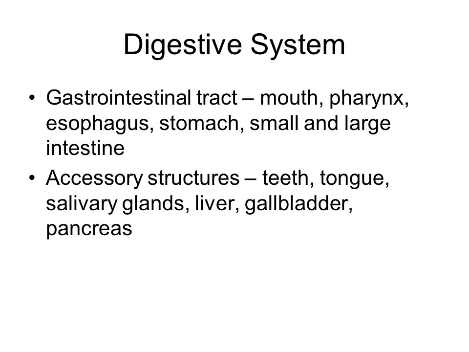 Digestive System Gastrointestinal tract – mouth, pharynx, esophagus, stomach, small and large intestine.