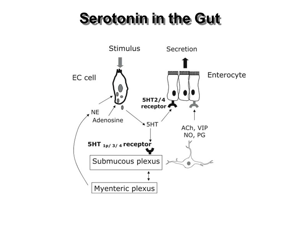 Serotonin in the Gut