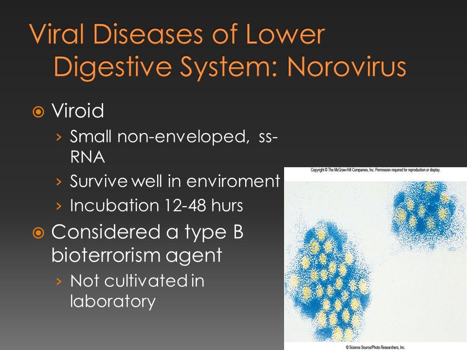 Viral Diseases of Lower Digestive System: Norovirus