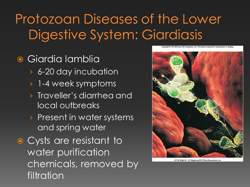 Protozoan Diseases of the Lower Digestive System: Giardiasis