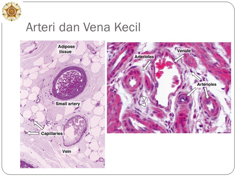 Arteri dan Vena Kecil