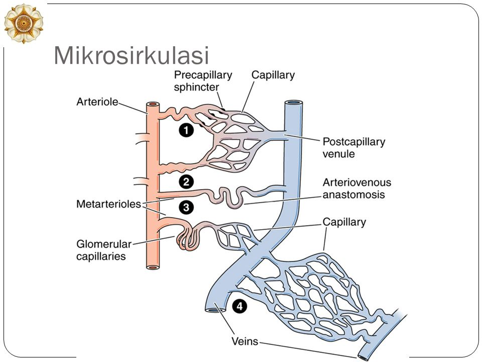 Mikrosirkulasi