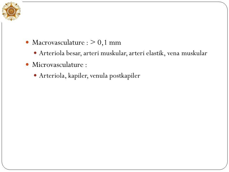 Macrovasculature : > 0,1 mm Microvasculature :