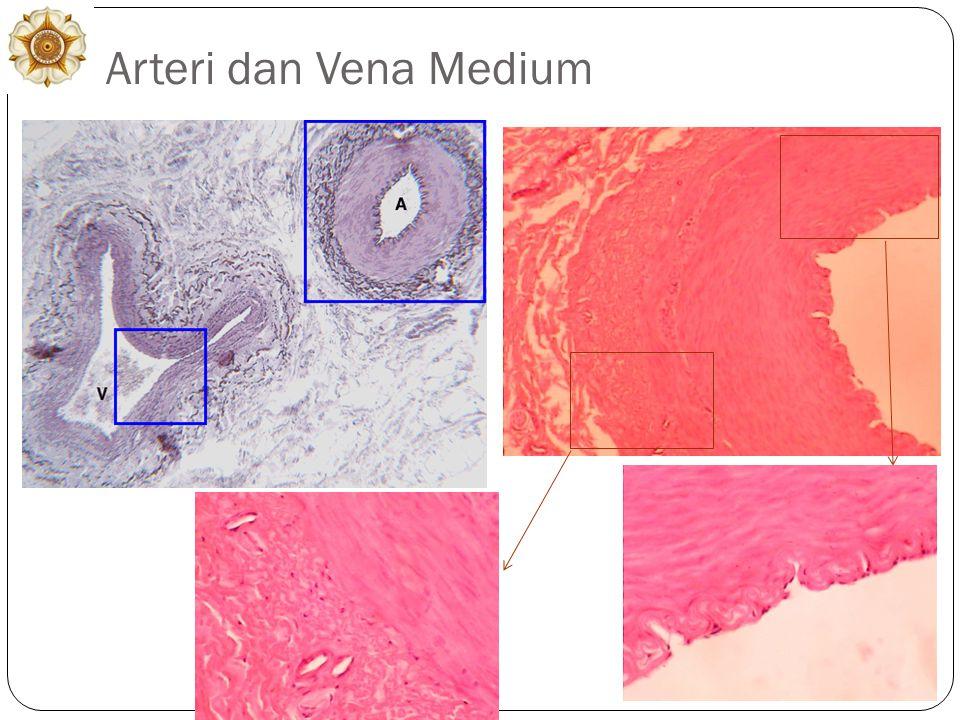 Arteri dan Vena Medium