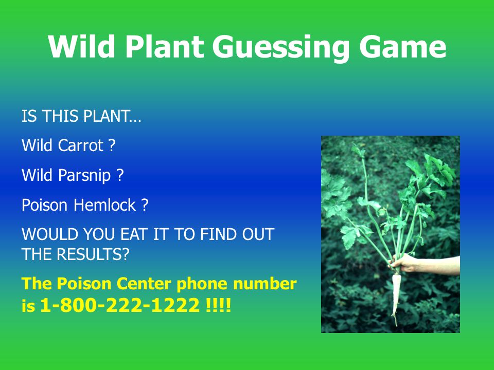 Wild Plant Guessing Game
