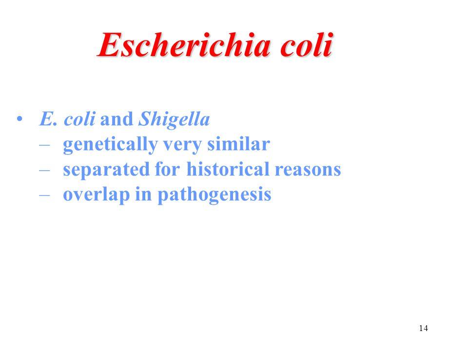 Escherichia coli E. coli and Shigella genetically very similar