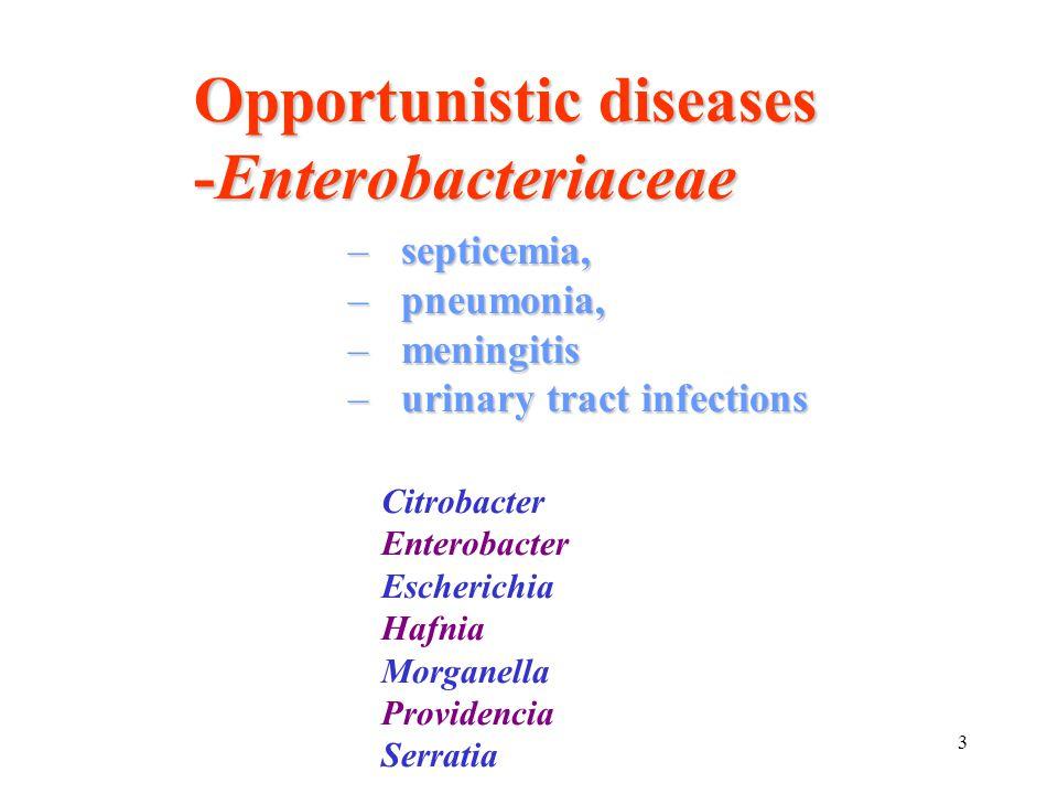 Opportunistic diseases -Enterobacteriaceae