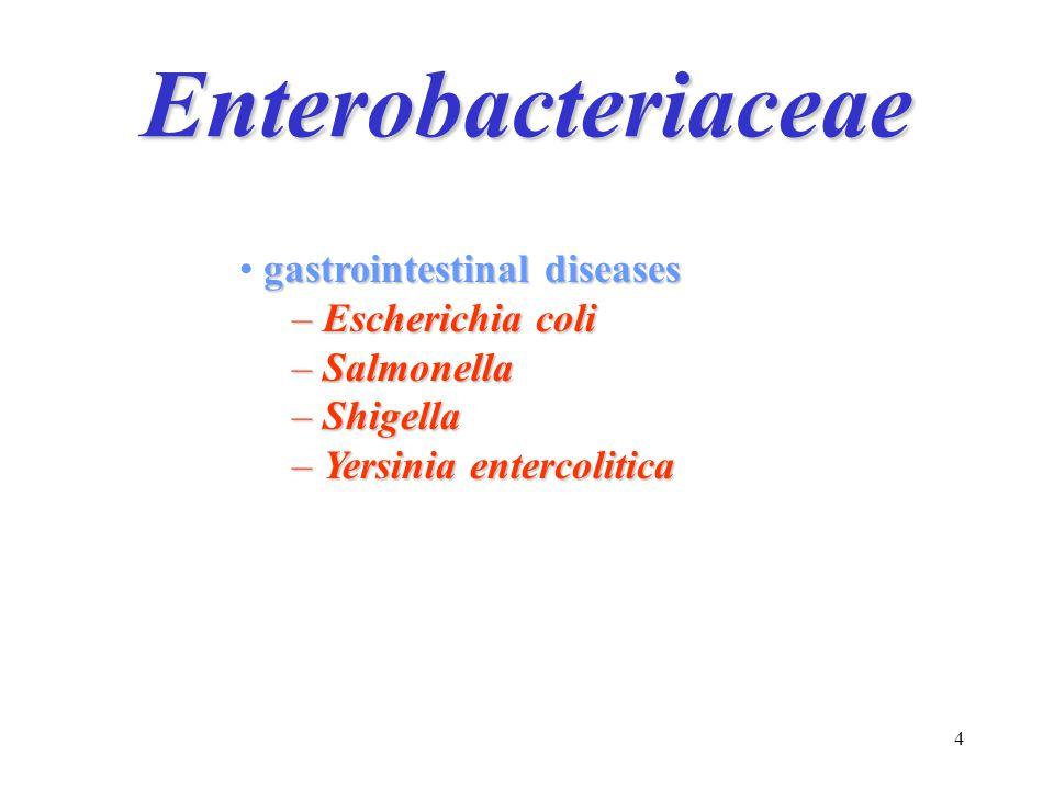 Enterobacteriaceae gastrointestinal diseases Escherichia coli