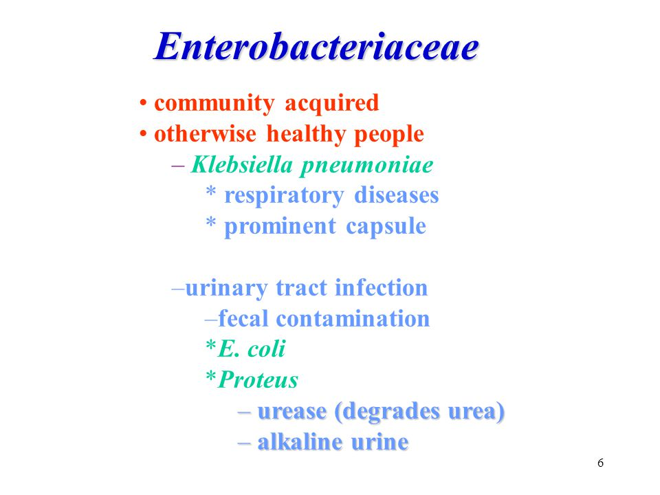 Enterobacteriaceae community acquired otherwise healthy people