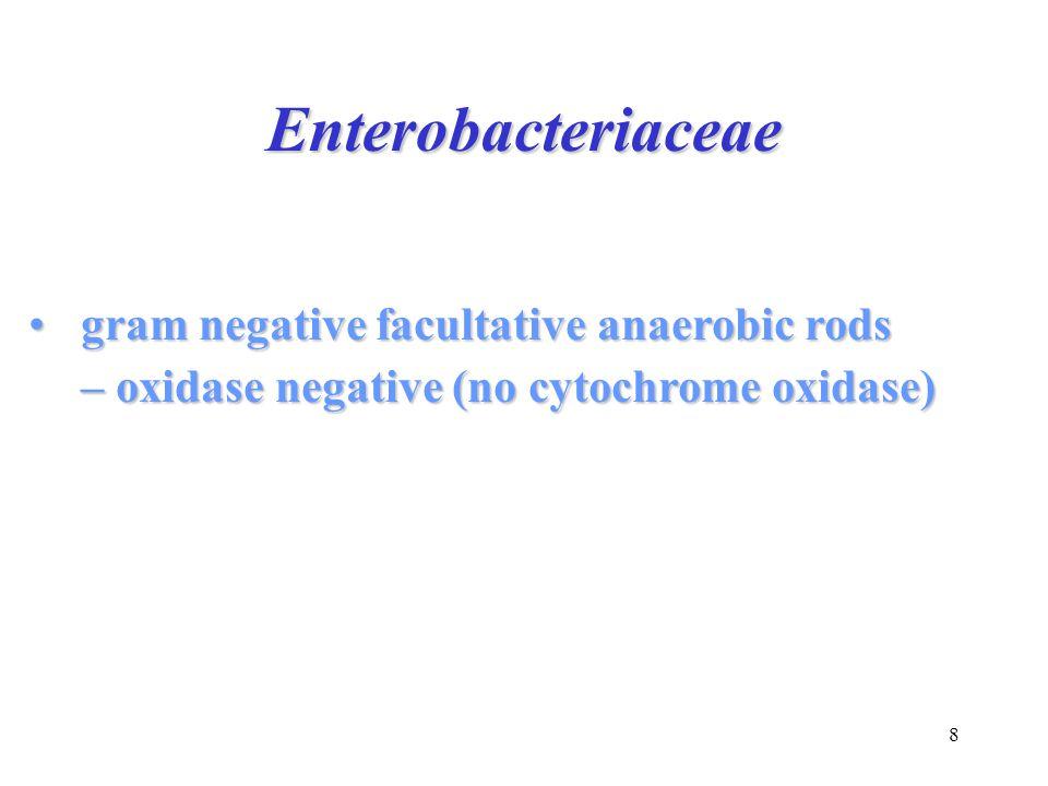 Enterobacteriaceae gram negative facultative anaerobic rods