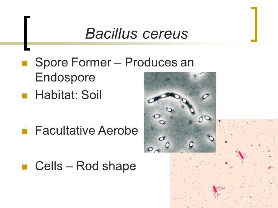 Bacillus cereus Spore Former – Produces an Endospore Habitat: Soil