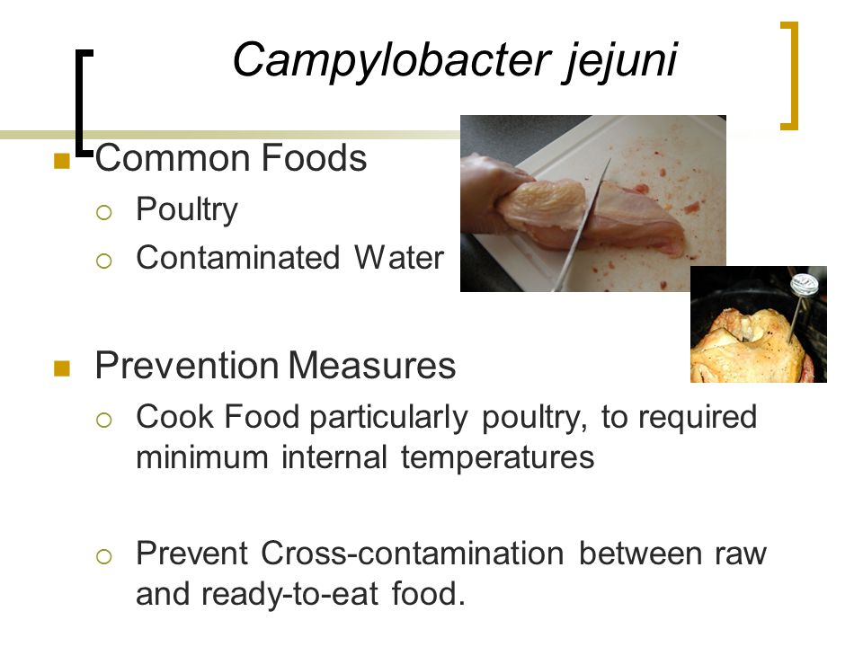Campylobacter jejuni Common Foods Prevention Measures Poultry