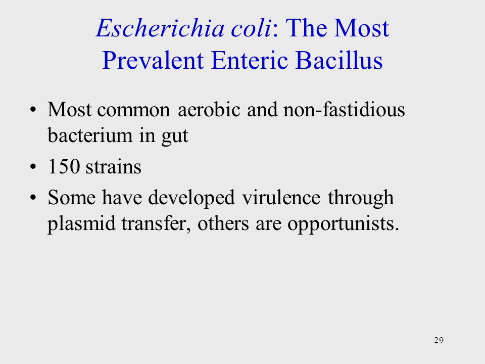 Escherichia coli: The Most Prevalent Enteric Bacillus