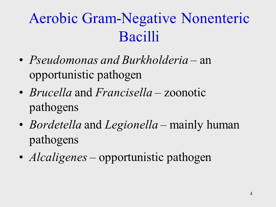 Aerobic Gram-Negative Nonenteric Bacilli